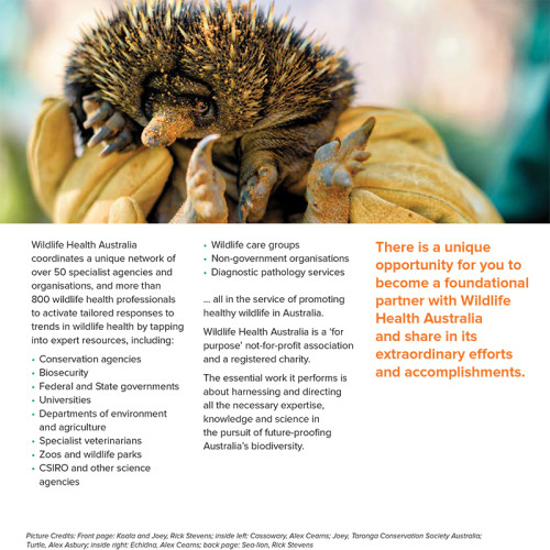 design for brochure of Wildlife Health Australia featuring an image of an echidna
