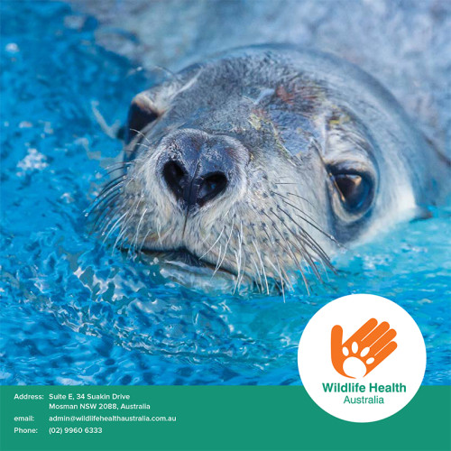 design for brochure of Wildlife Health Australia featuring an image of a seal