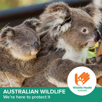 Wildlife Health Australia
