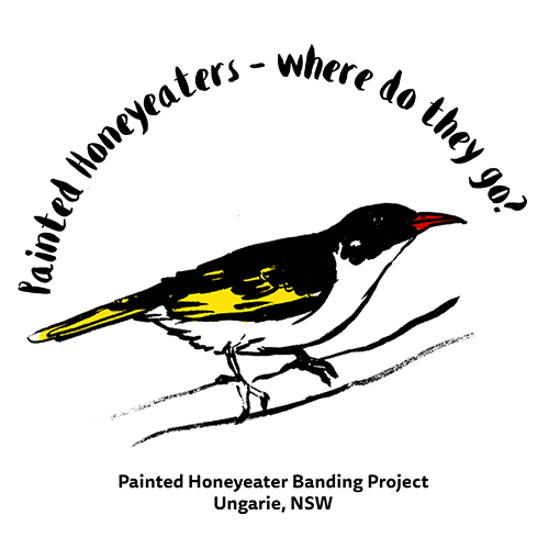 Illustration for a t-shirt of a painted honeyeater for ABSA by BKAD