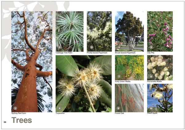 City of Sydney Habitat Creation Guide